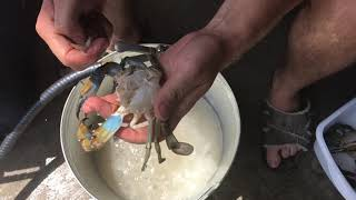 How to Clean / Cook Live Blue Crab