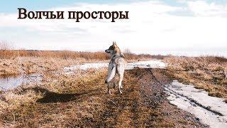 Волчьи просторы