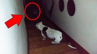 Cats and Dogs That Saw Something Their Owners Couldn