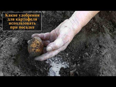 Удобрение для картофеля при посадке