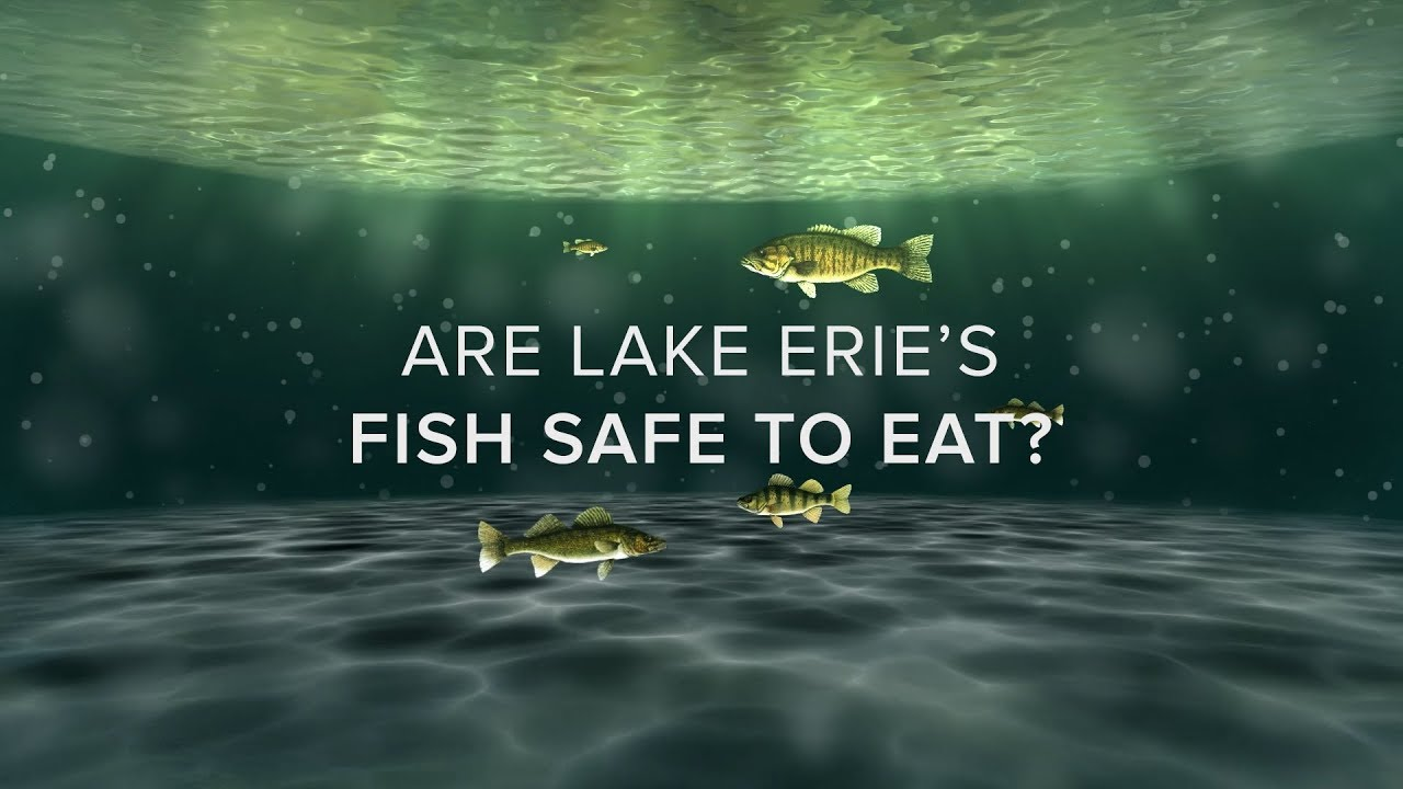 Are Lake Erie's Fish Safe to Eat?