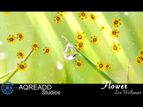 Video of Flower photo Live Wallpaper