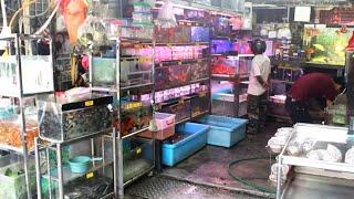 Aquarium Fish Market in Malaysia (Kula Lumpur)- KLCC