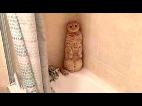 This will TEACH YOU WHAT A GOOD LAUGH IS - FUNNY ANIMAL compilation