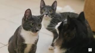 Первоуральское общество защиты животных  Кошки