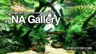 Galeria ADA - 180x120x60 po 7 miesiącach