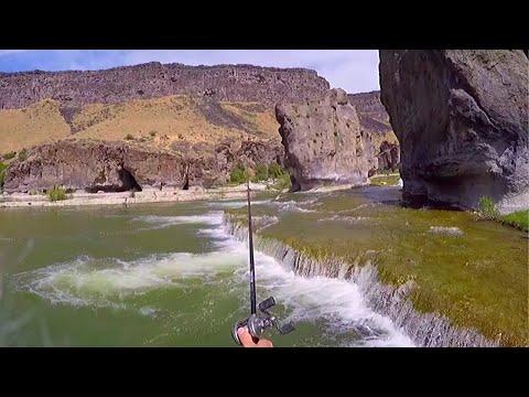 Fiskeri efter bass og stør med Ace