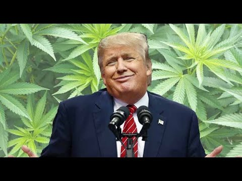 Trump Fears Legal Marijuana Issue Could Sink His Campaign