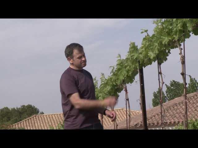 Irrigation de la vigne : le Languedoc-Roussillon en pointe