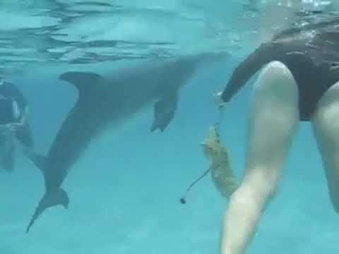Dolphin sexual assault woman
