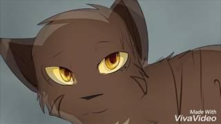 Коты-Воители. Грустная Анимация