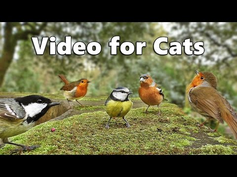 Videos For Cats To Watch Birds Singing And Bird Sounds Spectacular