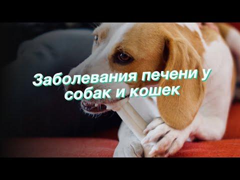 Заболевания печени у собак и кошек