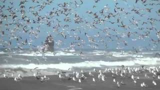 Birds on the Beach at Redwood National Park