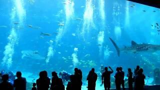Worlds Largest Aquarium Atlanta Video