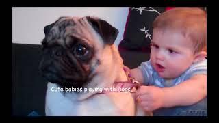 Funny babies vs funny animals Prank