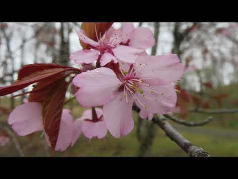 春です!桜をはじめ、園内の花もきれいに咲いてます!