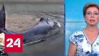 Спасти грендладского кита: прилив начнется совсем скоро