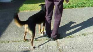 Rally Obedience: Training Turns And Pivots (with Clicker Training)