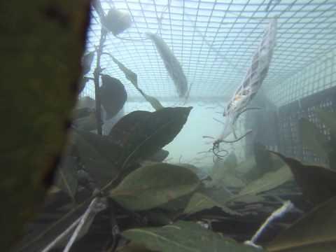 La caccia per pescare di un koryazhm