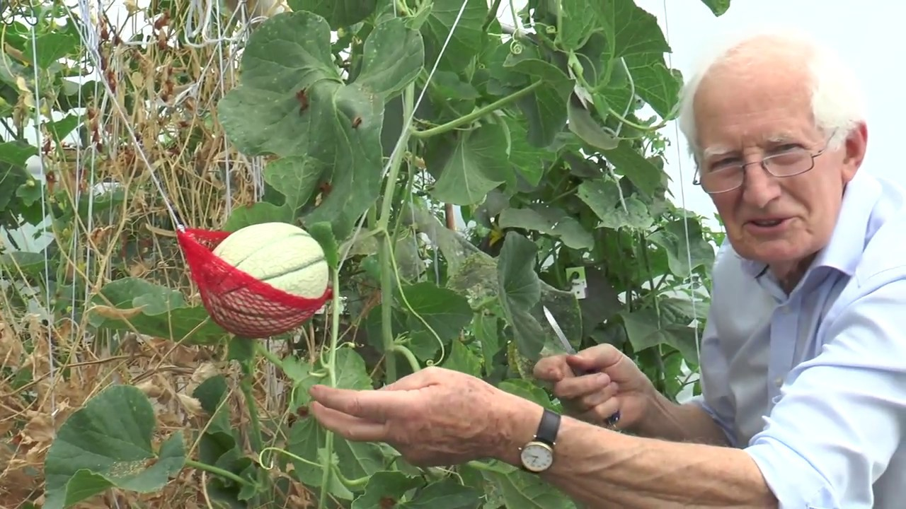 Growing and Harvesting Melons