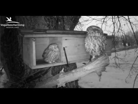 Mating & Male Brings Food - 01.04.17