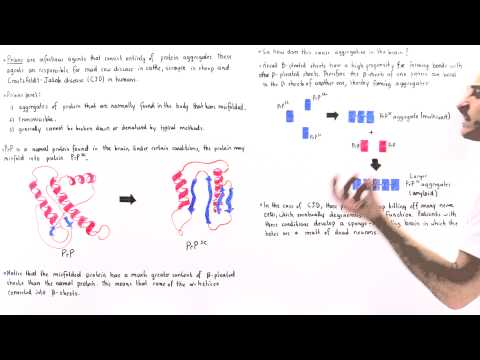 Video Prions and Protein Misfolding