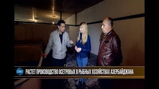 Ловля осетра в азербайджане