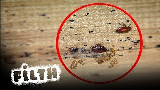 How To Remove A Bed Bug Infestation