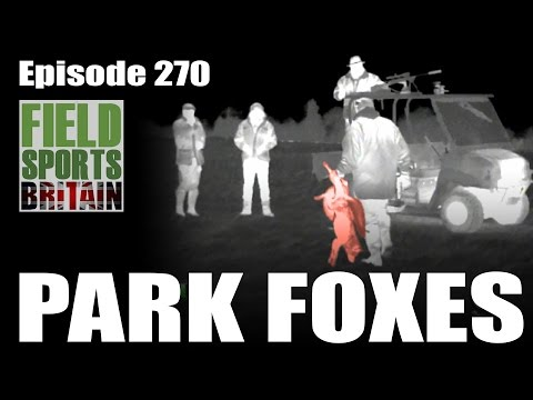 Fieldsports Britain – Park Foxes