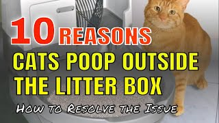 Why is cat pooping next to litter box