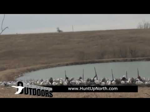 spring-snow-goose-hunting-with-up-north-outdoors-over-deadly®-decoys-windsocks-22---2016