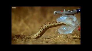 Лучшее видео Slow motion по версии Kometa.Red