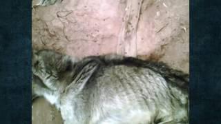 Rescate milagroso de perro Zeus Alexander