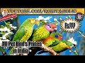 All Pet Birds Prices In India || Parrots And Parakeets