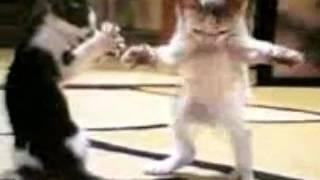 Arapça Sarki Kediler