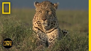 Safari Live - Day 304   National Geographic