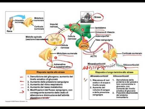 Ipertensione Passaggio 3 3 3 gradi di trattamento del rischio