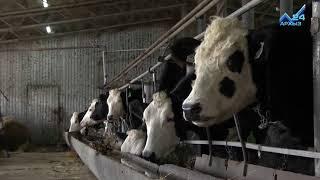 Создать свое хозяйство с нуля: история развития образцовой животноводческой фермы КЧР