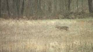 preview picture of video 'Ohio Youth Deer Hunting'
