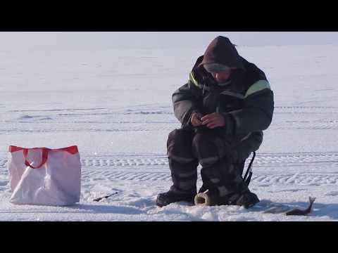 Ловим зимнего окуня на Чудском озере   В поиске трофея   Середина января 2019