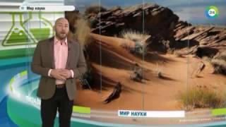 Как Сахара превратилась в пустыню