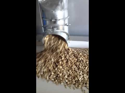 Cumin Seeds Processing