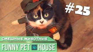 СМЕШНЫЕ ЖИВОТНЫЕ И ПИТОМЦЫ #25 ЯНВАРЬ 2019 [Funny Pet House] Смешные животные