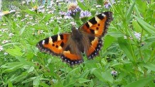 Бабочки. Лето 2016. Убейся позитивом.