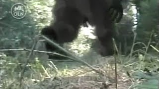 CALIFORNIA CREEK DEVIL (REAL BIGFOOT DOCUMENTARY)