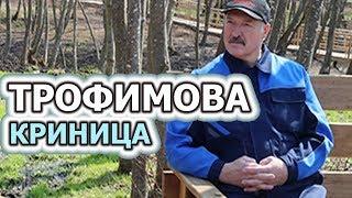 "🔴 Президент Александр Лукашенко на суботнике. ""ТРОФИМОВА КРИНИЦА""◄◄◄◄"