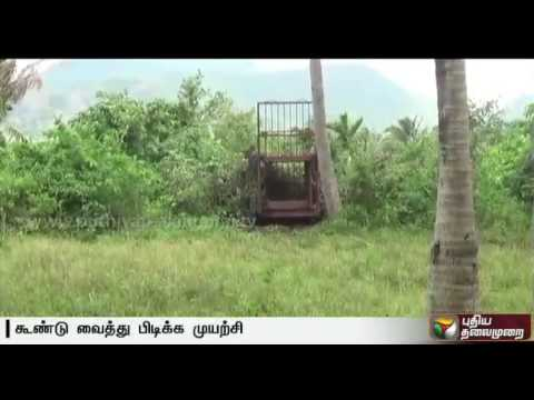 Tiger-movement-found-in-Nellai-village-forest-officials-set-up-trap