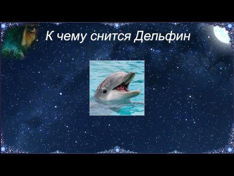 К чему снится Дельфин (Сонник)