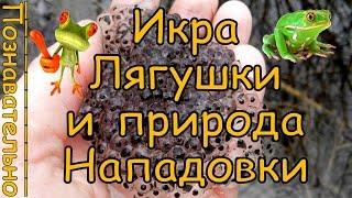 Жабья Икра и природа села Нападовка